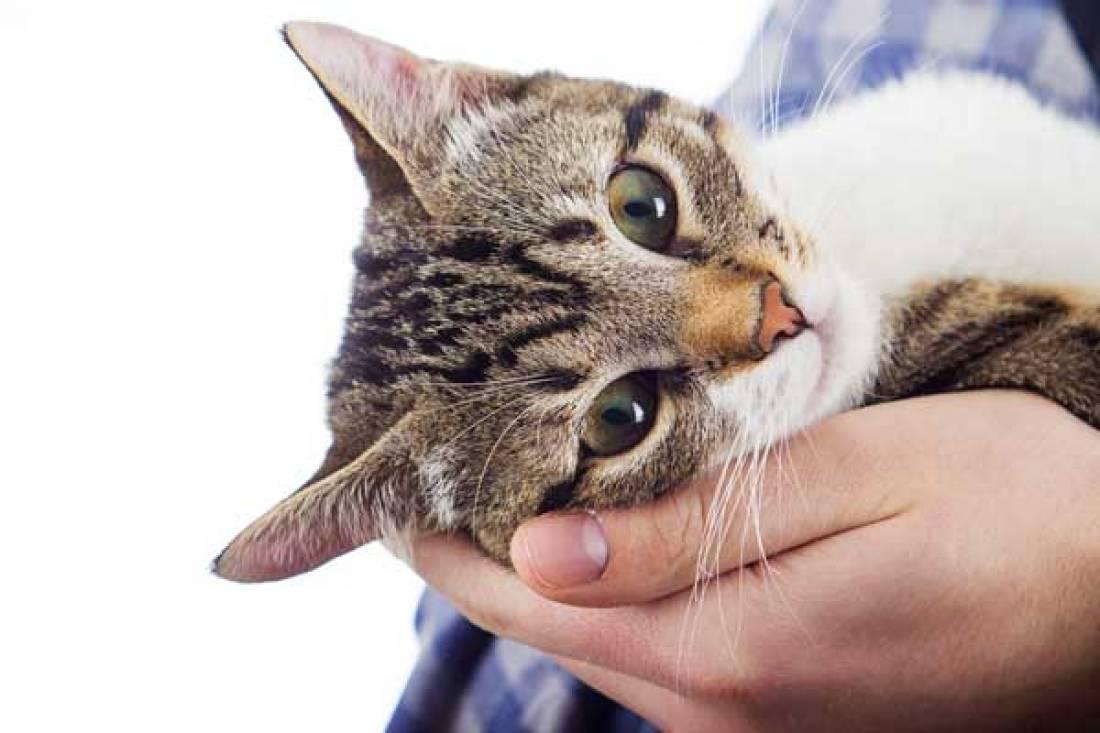 Obrázek horké kočičky